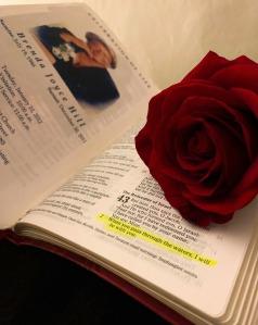 scripture rose