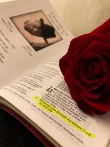 scripture rose2